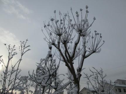 展示場、雪の朝