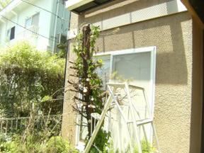 新潟の小さな外構店が本気で目指す日本一の仕事への道のりは、まず天気から!第73庭 伸びきった庭木の切り倒し